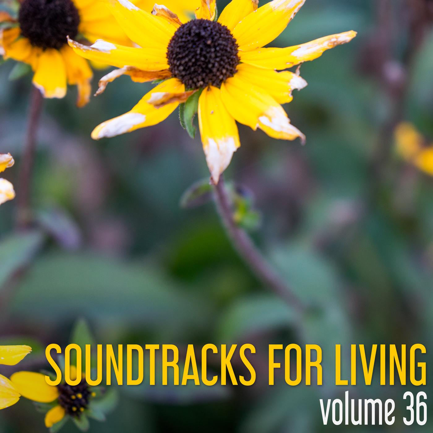 SFL - Volume 36